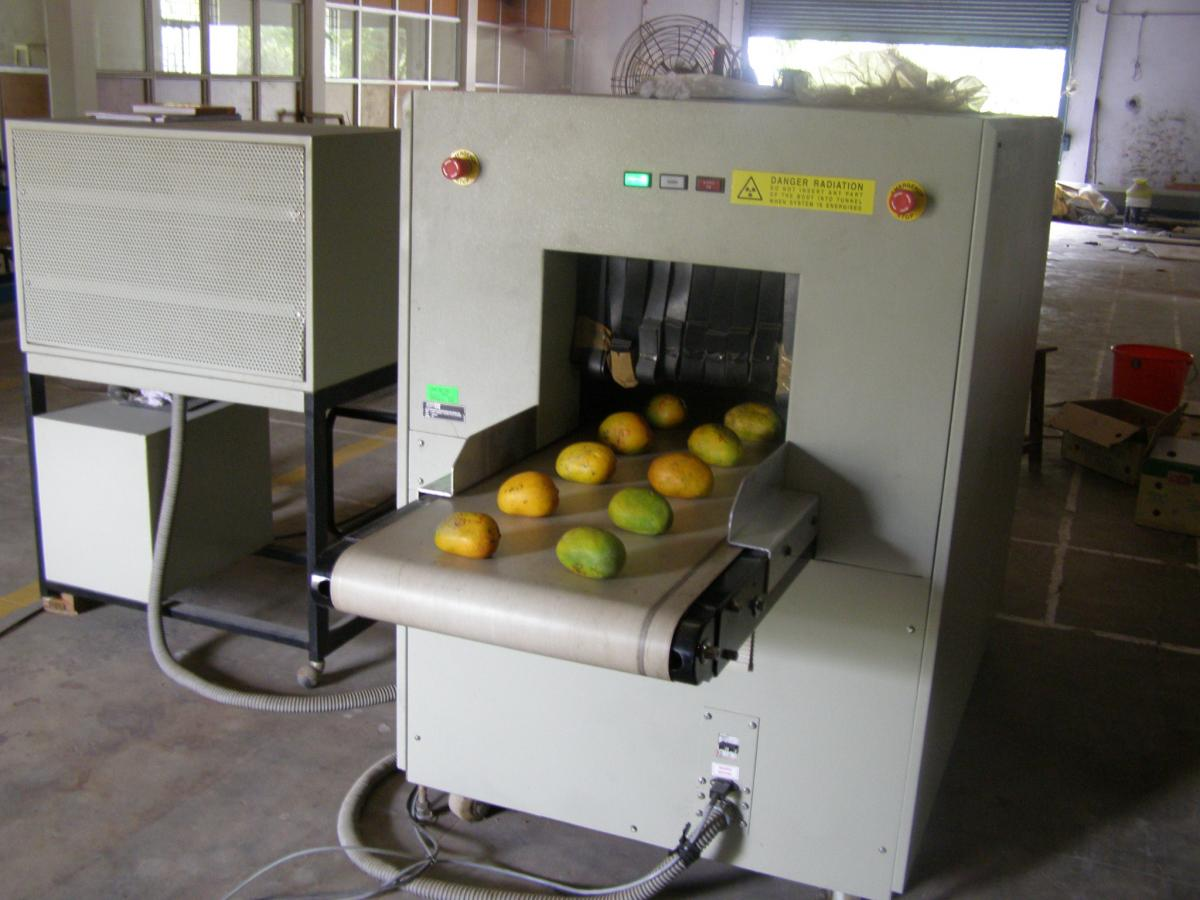X-ray Imaging based Mango Sorting System